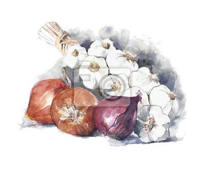 Cebula i czosnek akwarela samodzielnie na białym tle