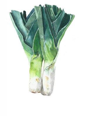 Cebula Por Cebula warzyw Akwarele ilustracji na białym tle