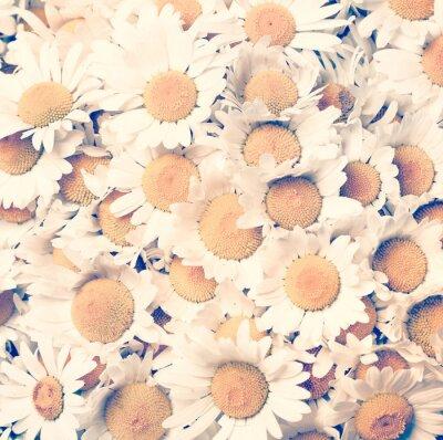 Obraz chamomiles kwiaty - styl vintage