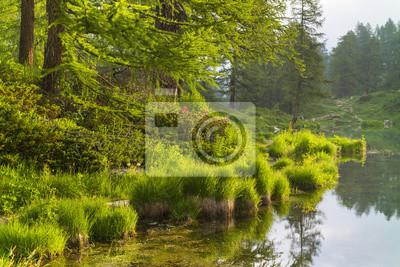 Cichy ranek na jeziorze z zieloną trawą w Włochy