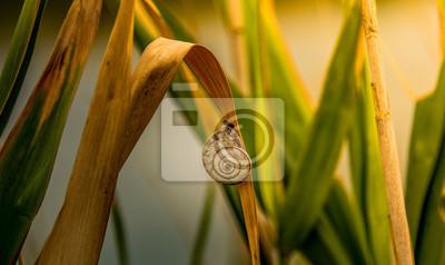 Obraz Ciekawy ślimak