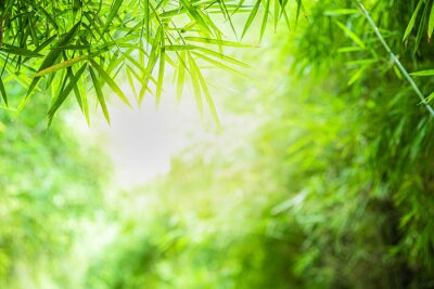 Obraz Closeup beautiful view of nature green bamboo leaf on greenery blurred background with sunlight and copy space. It is use for natural ecology summer background and fresh wallpaper concept.