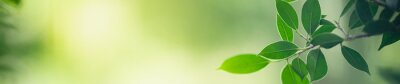 Obraz Closeup nature view of green leaf on blurred greenery background in garden with copy space for text using as summer background natural green plants landscape, ecology, fresh cover page concept.
