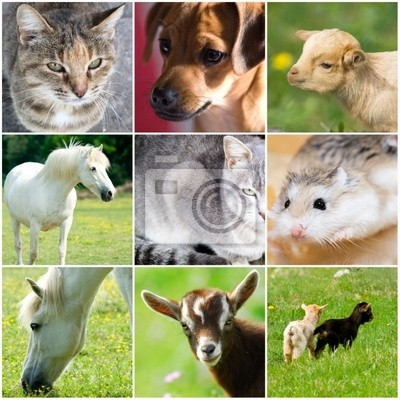 collage animali