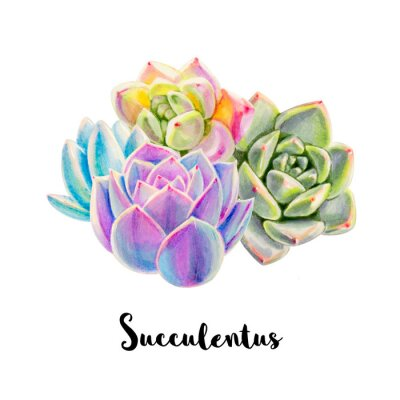 Composition from colorful succulents.  Decorative plants. Floral print. Marker drawing. Watercolor painting. Beautiful houseplants. Greeting card. Flower painted background. Hand drawn illustration.