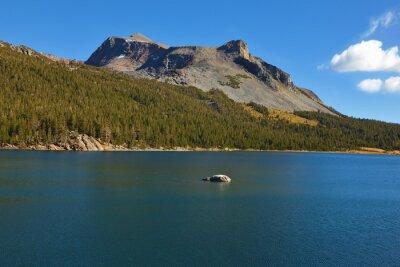 Coniferous wood and mountain on lake Tioga