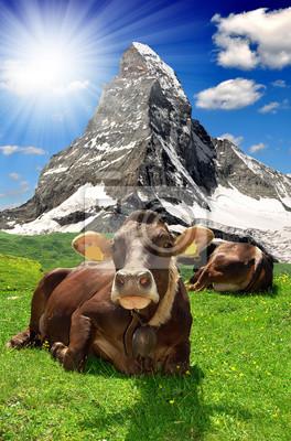 Cow leżącego w meadow.In tle Matterhorn-Alpy Szwajcarskie