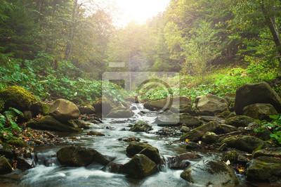 Obraz Creek in woods