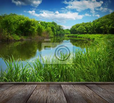 Creek w lesie