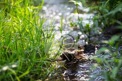Obraz creek w lesie wiosny