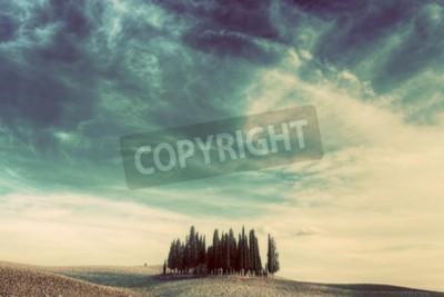 Obraz Cypress drzew na polu w Toskanii, Włochy o zachodzie słońca. Toskański krajobraz w stylu vintage, retro nastrój