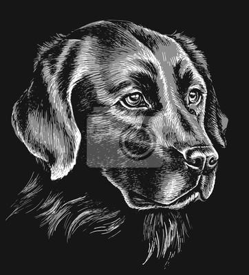 Obraz Czarno-biały labrador szkic