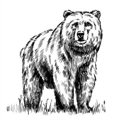 Obraz czarno-biały niedźwiedź grawerować wyizolowanych wektorowe