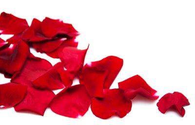 Obraz Czerwone róże płatki