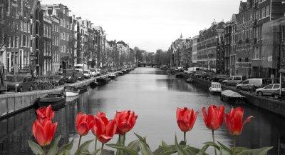Obraz czerwone tulipany w Amsterdamie