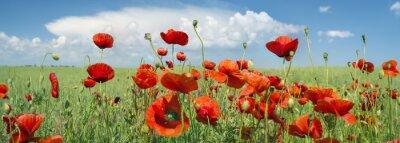 Obraz czerwony mak panorama