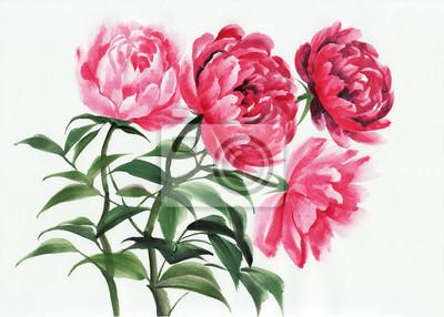 Cztery różowe piwonie