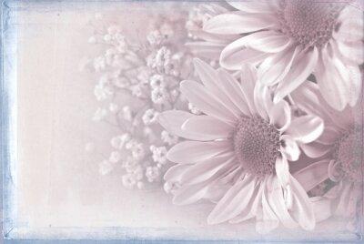 Obraz Daisy bukiet z pastelowe różowe tekstury nakładki i niebieską ramką