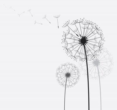 Obraz Dandelion / Dmuchawiec na wietrze