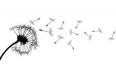 Obraz Dandelion sylwetka