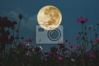 Obraz Dark cosmos flower with full moon at night.
