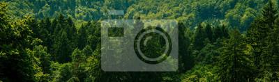 Obraz Dark green forest landscape