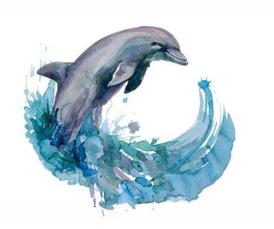 Obraz delfin