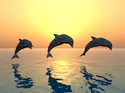 Obraz Delfiny skoków