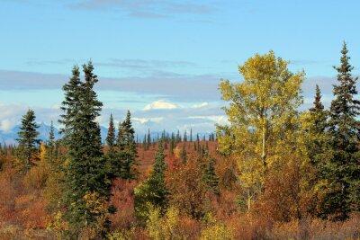 Obraz Denali Narodowy im Herbst