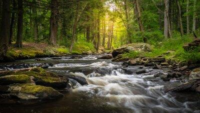 Obraz Dingman's Creek w George W. Childs State Forest Park w Dingman's Ferry, PA w słoneczny letni dzień