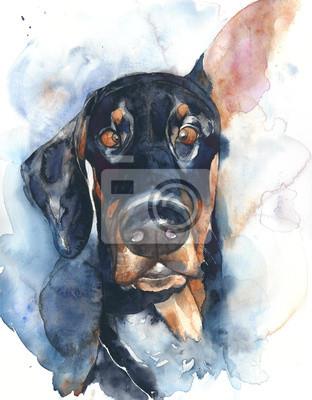 Dog niemiecki portret doberman akwarela ilustracji samodzielnie na białym tle