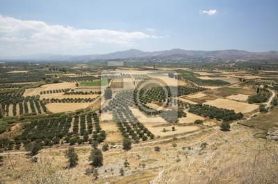 Dolina oliwek na Krecie