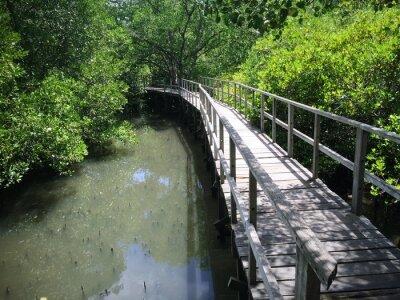 Obraz Drewniany most na Riverside
