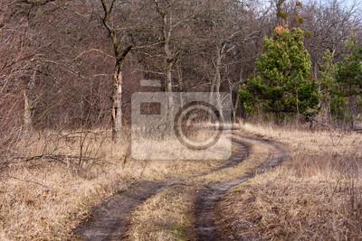 Droga koleiny w lesie