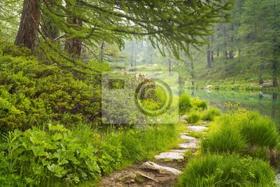 droga w lesie przed jeziorem we Włoszech