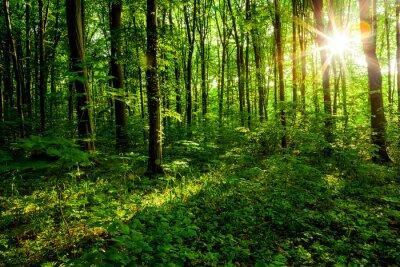 Obraz drzew leśnych