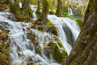 dużo potoków między drzewami w parku w Chorwacji