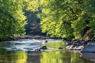 Obraz Dzika szwedzka rzeka we wrześniu