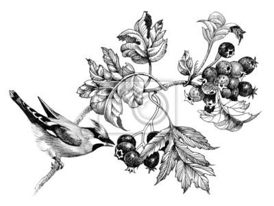Dzikie egzotycznego ptaka na gałązce