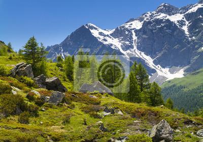 dzikie kamienie i sosny w Alpach we Włoszech