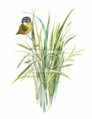 Dzikie ptaki egzotyczne akwarela na kwiaty