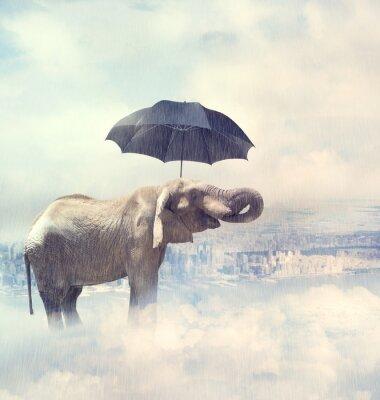 Obraz Elephant korzystających deszcz avobe miasto w chmurach