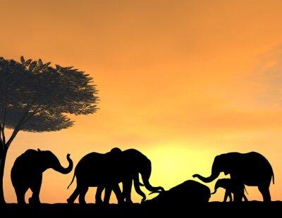 Obraz Elephants Morn Their Dead at sunset, a very tender scene.
