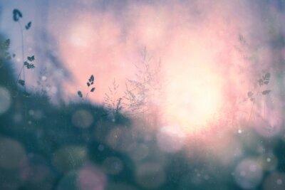Obraz Fantasy słońca bokeh niewyraźne tło łąka