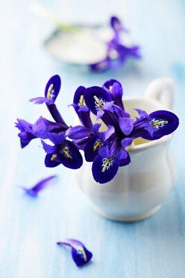 Obraz Fioletowe kwiaty irysa w Pucharze archiwalne