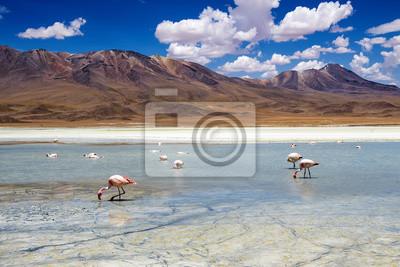 Flamingi w lagunie na boliwijskiej Altiplano
