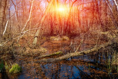 Flooded forest at early spring