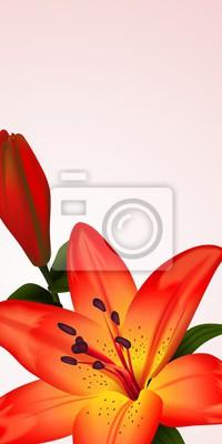 Obraz Floral karty lub transparentu z bicolored lilia