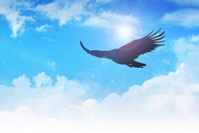 Obraz Flying Eagle w powietrzu