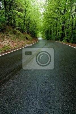 forest road - strada nel bosco